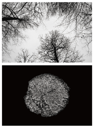 Vanished Tree - Snow / 2012
